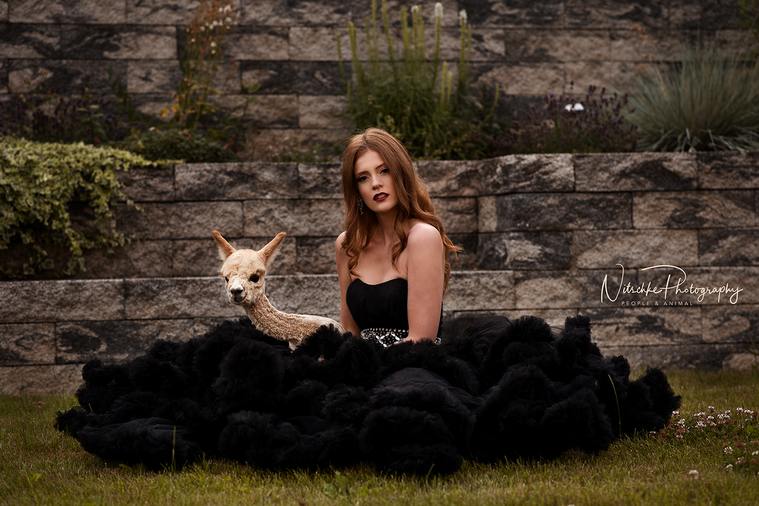 Anne Nitschke Photography People Animal Photography romantic dreamy emotional fairy-tale creative elegant photo shoot Nikon D750 Photoshop Photo Retouching Zürich Switzerland emphatic therapy luxury unique experience once in a lifetime experience princess dress portrait photography animal photography animal therapy art therapy Alpacas photo shoot Jessica Yen Nhi Nguyen Animal Magic 2018