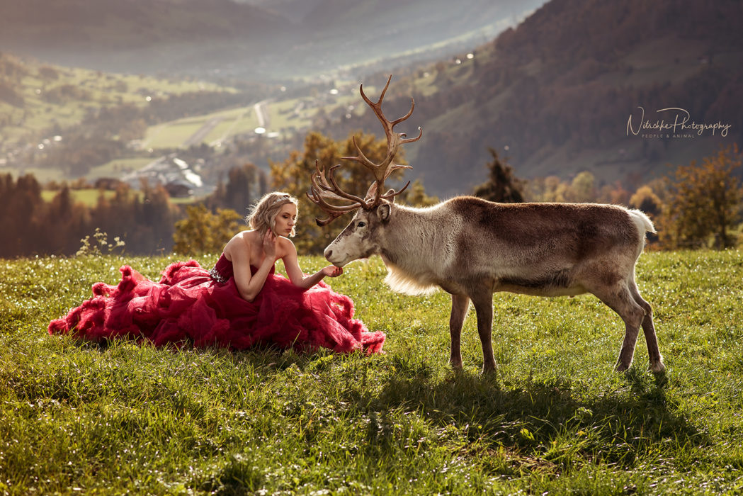 Anne Nitschke Photography People Animal Photography romantic dreamy emotional fairy-tale creative elegant photo shoot Nikon D750 Photoshop Photo Retouching Zürich Switzerland emphatic therapy luxury unique experience once in a lifetime experience princess dress portrait photography animal photography Thun Berner Oberland animal therapy art therapy reindeer photo shoot reindeers Arnold Luginbühl mountains summer Valea Zimmer Francesca Maggi red dress